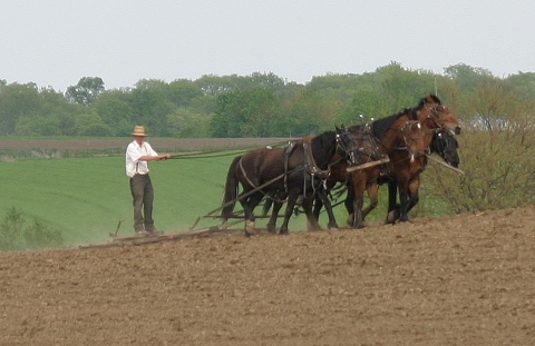 Kalona Amish harrow