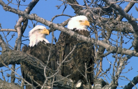 Decorah Eagles CR John P Torpy