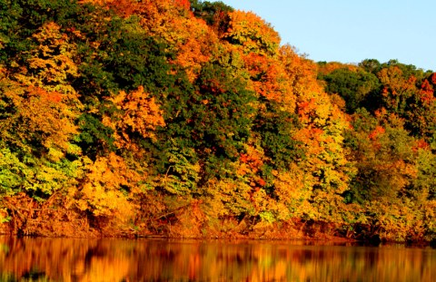 Linn County Conservation Fall